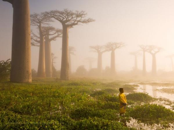 /Files/images/fotografyi/2016/17591610-R3L8T8D-1000-girl-baobab-trees_90162_990x742.jpg